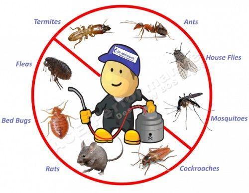 pest control Nambour